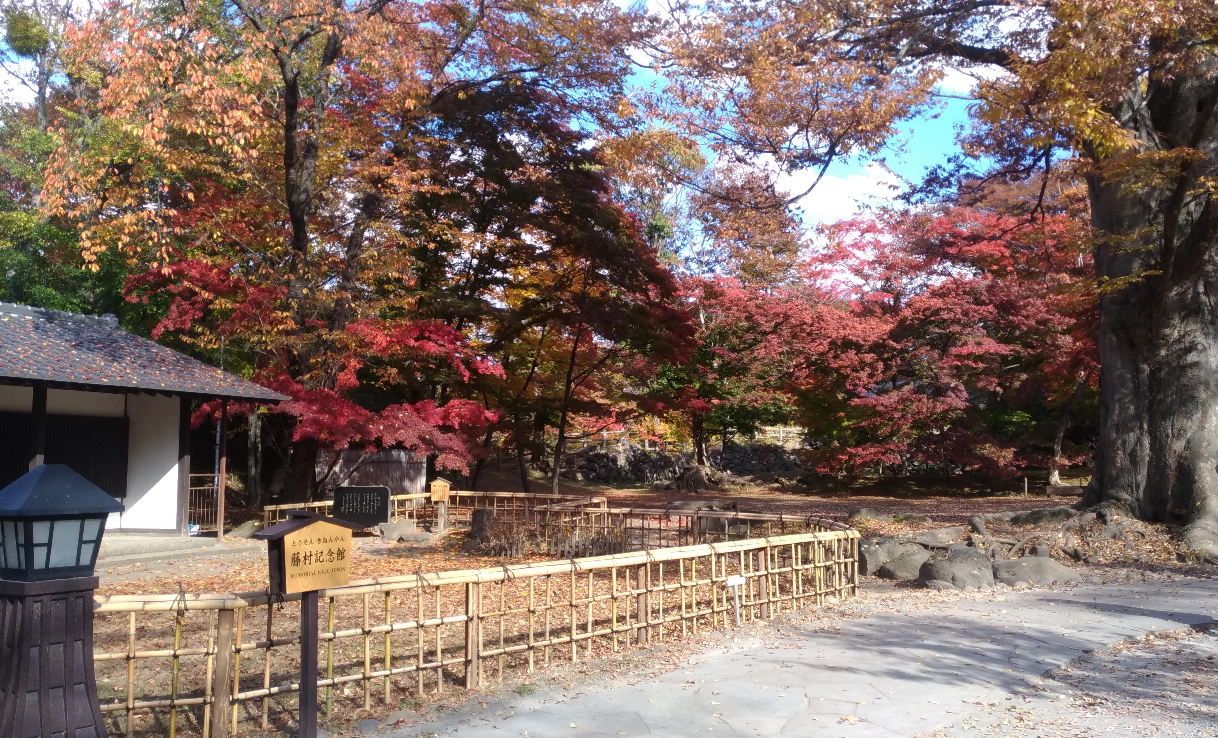 懐古園で紅葉見物